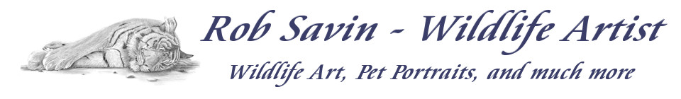 Rob Savin – Wildlife Artist